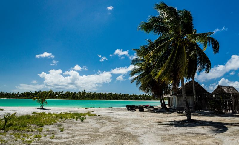 kiritimati_lagoon_palms